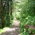 woodland-trail