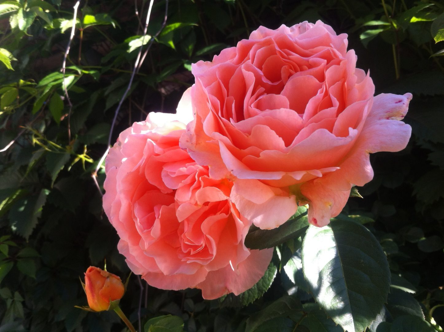 Roses of intuition